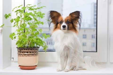 why-is-my-dog-eating-house-plants